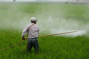 EPA Begins Testing Foods for Common Herbicide