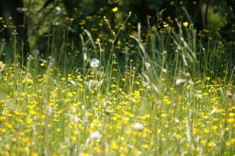 Find Out How to Combat Spring Sinuses
