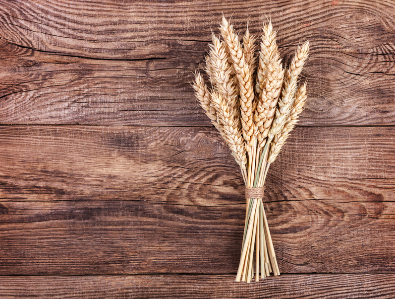 Corn & Wheat: Why You Should Think Twice Before Eating It