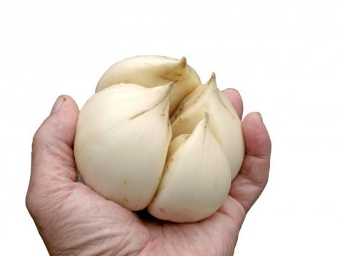 All About Elephant Garlic & How To Make a Wellness Paste