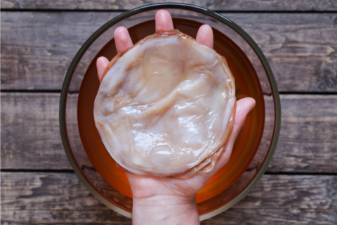 What is Kombucha? 5 Reasons You Should Know- Kombucha Origin